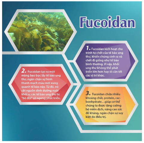 cơ chế tác động của fucoidan nhật bản