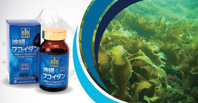 fucoidan okinawa