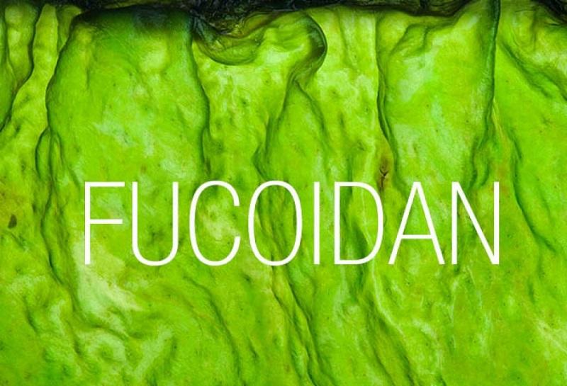 fucoidan thuốc chống ung thư